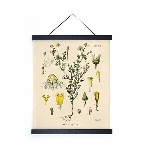 Vintage Botanical Chamomile Canvas w/Magnetic Hanging Frame