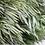 Thumbnail: Salignum Male - Green