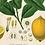 Thumbnail: Vintage Botanical Lemon Canvas w/Magnetic Hanging Frame