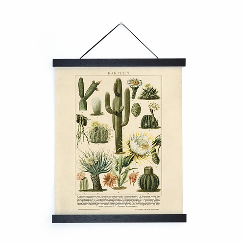 Vintage Cactus Canvas w/Magnetic Hanging Frame