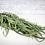 Thumbnail: Willow Eucalyptus