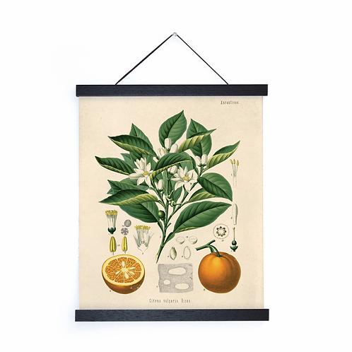 Vintage Botanical Orange Canvas w/Magnetic Hanging Frame