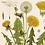 Thumbnail: Vintage Dandelion Canvas w/Magnetic Hanging Frame
