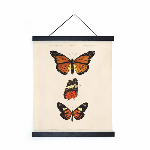 Vintage Butterfly Canvas w/Magnetic Hanging Frame