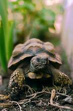tortoise-5718544_1920.jpg
