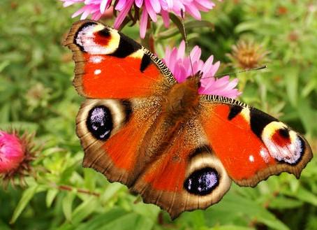 Top tips for a wildlife friendly garden