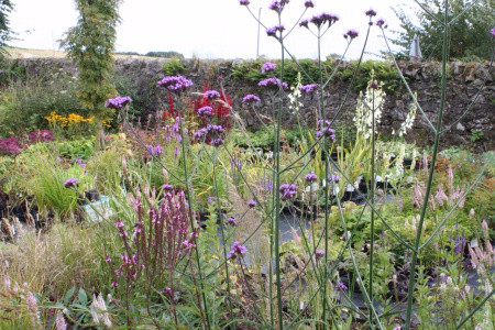 How to plan a herbaceous border