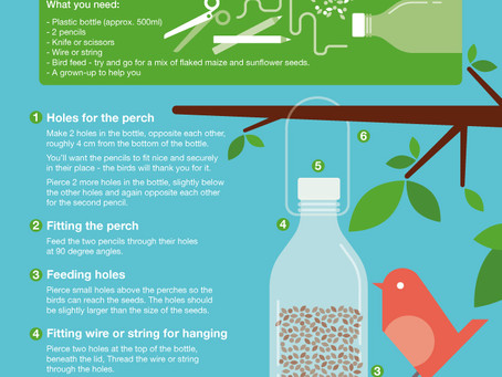 How to make your own bird feeder