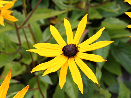 Get the most out of your summer flowering plants