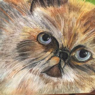 """""""Jenny"""". 16x20 pastel on paper"""
