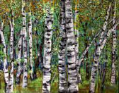 Landry_Birch_Tree_Forest_B_16x20_Acrylic