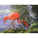 Burgarella2016_A-Flamingo-AC-1.jpg
