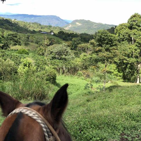 Kaffe Bueno's Visit To Farmers 2018