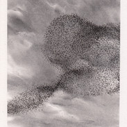 Murmuration charcoal and ink