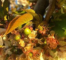 Petal%20Fall-Fruit%20Set_edited.jpg