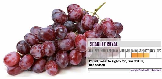 Scarlet Royal grapes. _ Variety Availabi