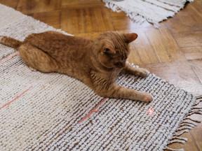 Lazerler Kedilerin Dostu mu, Düşmanı mı?