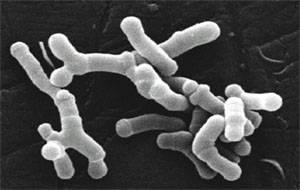 Il microbiota e l'obesità