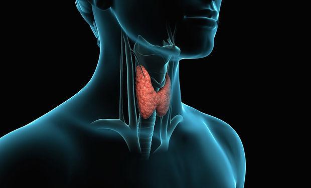 tiroide.jpg