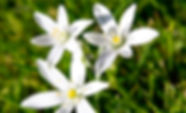 star of bethlehem.jpg