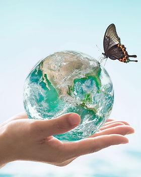aqua butterfly world.jpg