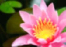 GOOD PINK FLOWER_edited_edited.jpg
