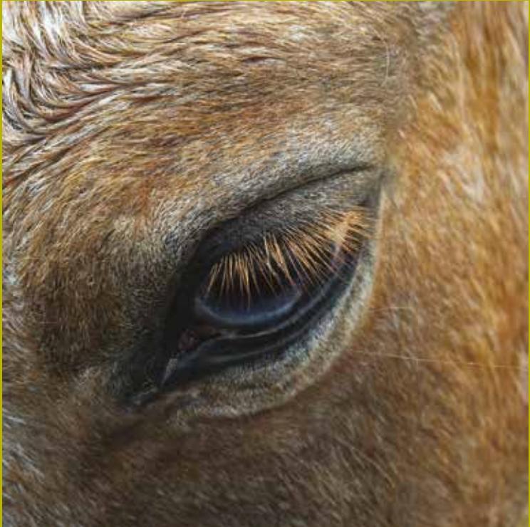 Mieux connaitre le cheval pour assurer bien-être et sécurité