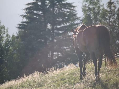 Surveillance quotidienne des chevaux au pré
