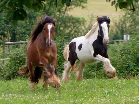 Un mois de publications sur le bien-être du cheval