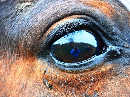 L'oeil le plus grand de la création?