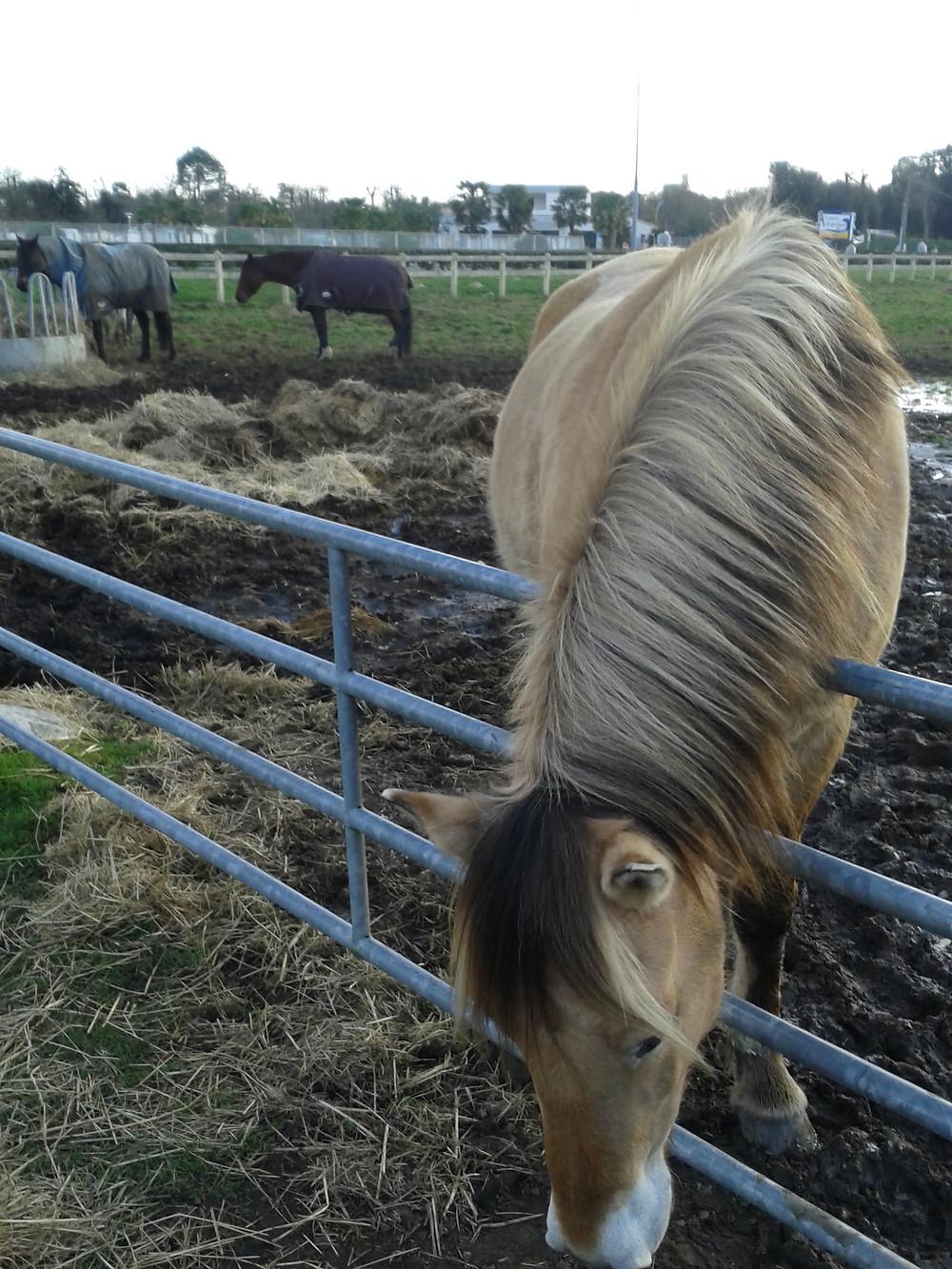D'après Hop à Cheval, le cheval dans la boue