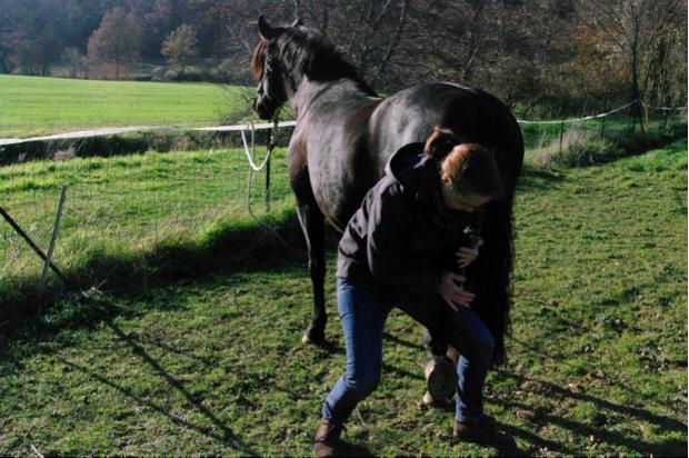Ostéopathie chez le cheval