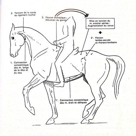 rassembler, cheval