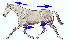 travail, cheval, abdos, dos