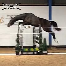 salvador jump.png