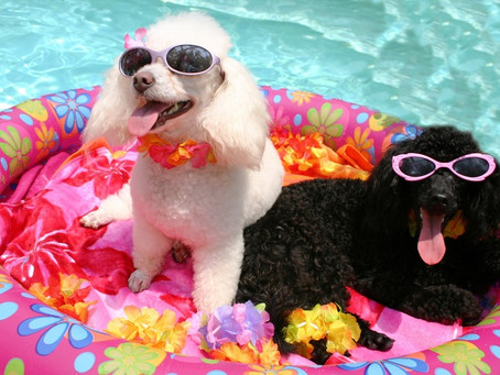My Top 5 Fun Ways To Keep Your Dogs Cool This Easter Weekend