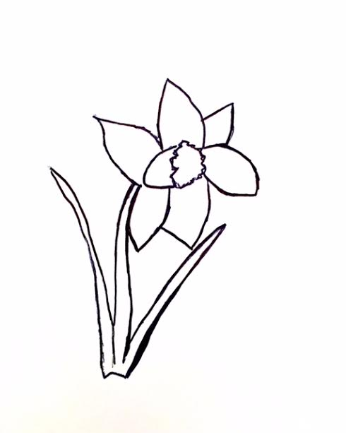 Daffoldil drawing