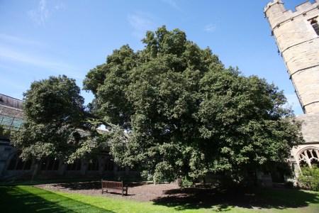 new-college-tree