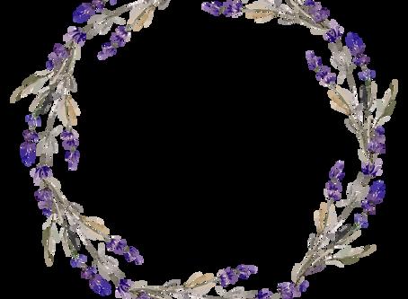 Virágzik a levendula