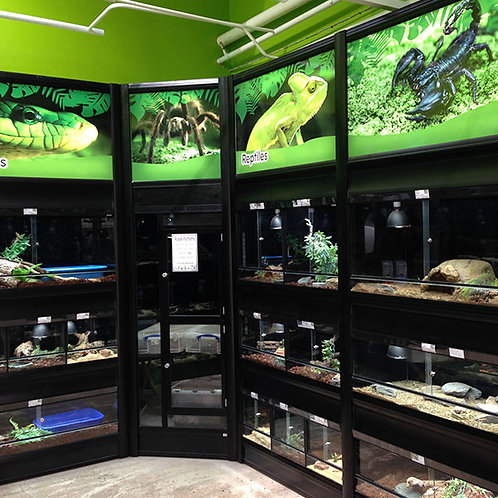 Pet Store and Automated Reptile Display Case