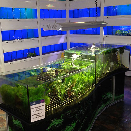 Smart Automated Aquarium Displays