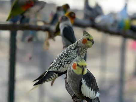 Vogels op hun best in het Breerpark