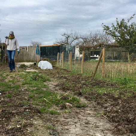 Gardening Project - Part 001