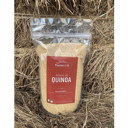Lentilles quinoa de Normandie.