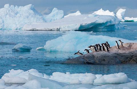 gentoo-penguins-antarctica-79B75GM.jpg