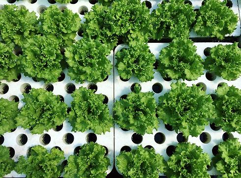 sustainable-farming-68ZHZME.jpg