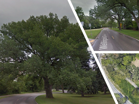 Wellington Cres Site Prep Including Tree Removal Set to Begin