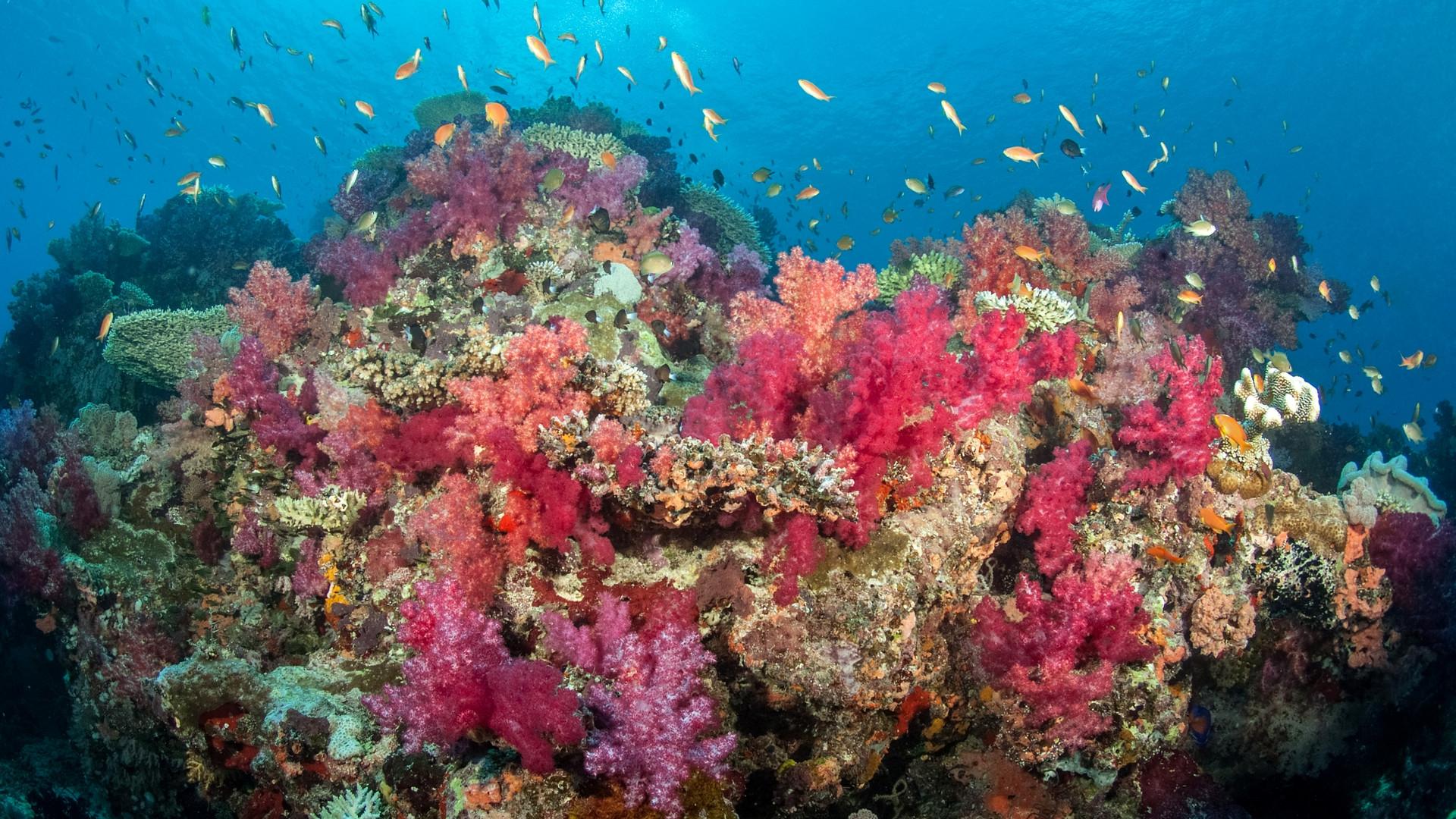 Taveuni-Rainbow_Reef