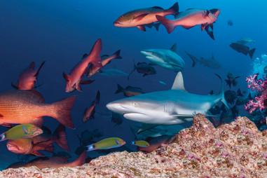 Fijis bunte Unterwasserwelt