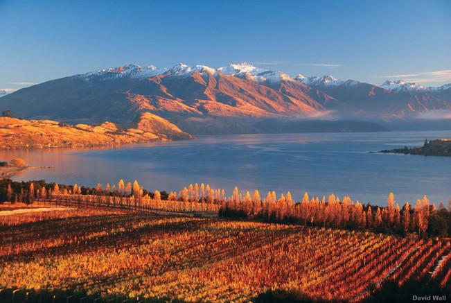 Weingebiet beim Lake Wanaka